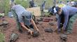 Galápagos: Liberan 191 tortugas gigantes para restaurar fauna