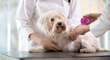 Mascotas: Cómo tratar cortes en las patas de tu perro