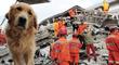¿Cómo entrenar a tu mascota para desastres naturales?