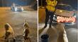 Mujer de buen corazón alimenta perros sin hogar con resguardo policial