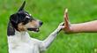 Tips para mantener a tus mascotas felices