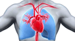 Sistema Circulatorio: cómo funciona y cuáles son las partes del aparato circulatorio