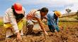 Midagri destinó S/ 682 millones en créditos a pequeños productores para impulsar el agro