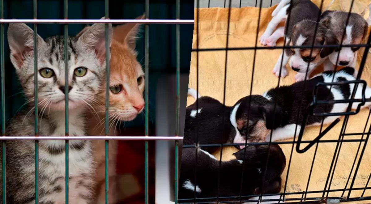 mas-de-100-animales-mueren-en-un-incendio-tras-explosion-en-una-tienda-de-mascotas