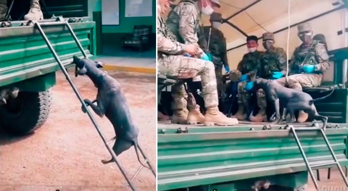 perrito-sorprende-a-soldados-del-ejercito-peruano-tras-pasar-complicado-reto-gracias-a-su-perseverancia-video