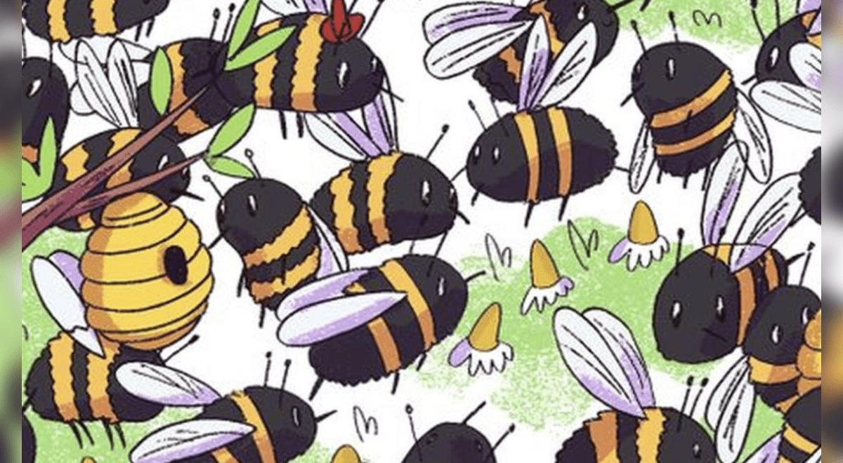 ubicas-al-oso-escondido-entre-las-abejas-un-reto-visual-dificil-de-superar-fotos
