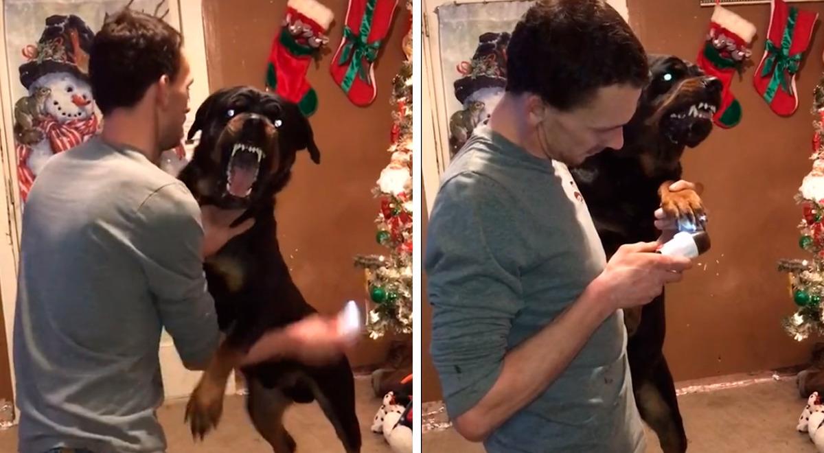 perro-tiene-demoniaca-reaccion-cuando-le-cortan-las-unas-con-una-amoladora-video