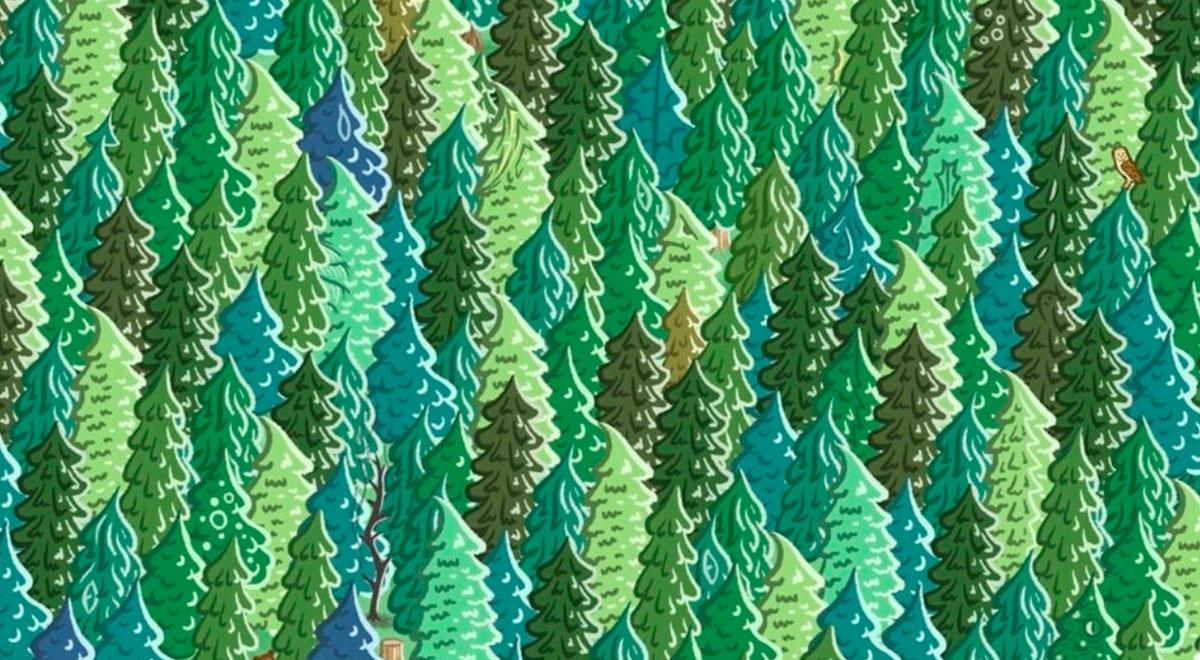 ves-al-dragon-camuflado-entre-los-frondosos-arboles-un-reto-visual-solo-para-expertos-fotos