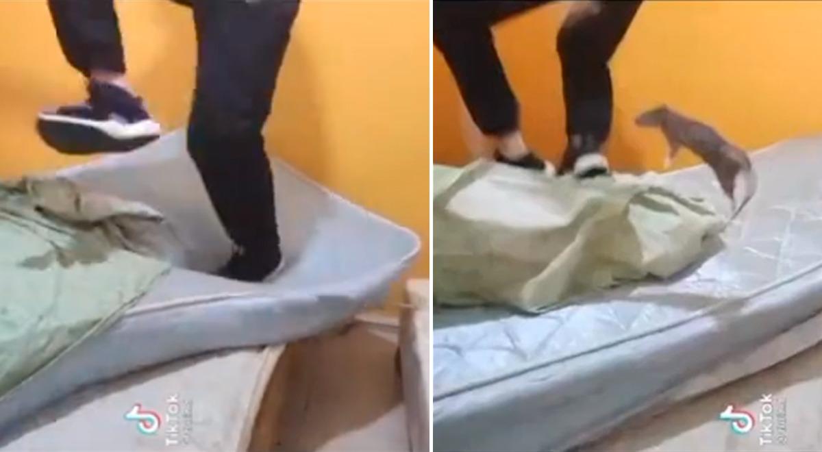 tiktok-joven-desata-la-risa-de-cibernautas-tras-epica-reaccion-al-ver-a-una-rata-video