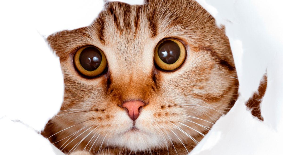 dia-internacional-del-gato-cuales-son-los-beneficios-de-tener-un-minino-en-casa