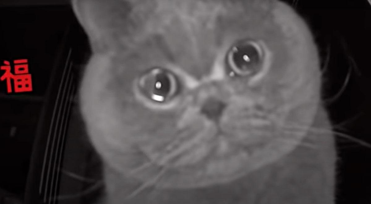 gatito-llora-frente-a-una-camara-de-seguridad-al-escuchar-la-voz-de-su-duena-video