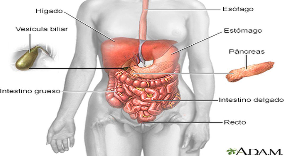 sepa-sobre-la-obstruccion-de-las-vias-biliares