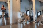 Joven le juega una broma a su perro, pero él se da cuenta y la deja en ridículo [VIDEO]