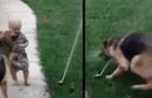 Perro protege a su pequeño dueño de un 'peligroso' aspersor de agua para que no se mojara [VIDEO]