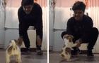 Joven intenta realizar reto de baile en TikTok y su perro termina robándose el show [VIDEO]