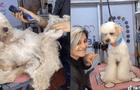 Perrito abandonado es sometido a un cambio de look y sorprende con increíble resultado [VIDEO]