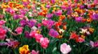 Conoce qué flores puedes cultivar en primavera [FOTOS]