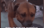 Perro llora desconsoladamente al darse cuenta que fue abandonado por su familia [VIDEO]
