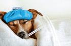 Mascotas: Enfermedades comunes en perros adultos