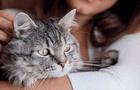 Mascotas: ¿Pueden padecer de demencia senil?