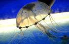 Australia: Adolescente muere por picadura de una medusa de caja
