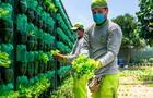 Surco: 24 comedores populares reciben hortalizas del biohuerto vertical más grande del Perú