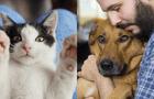 Mascotas: 7 lugares dónde puedes adoptar perros y gatos en Lima