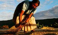Cada 24 de junio se celebra el Día del Campesino en Perú. Conoce aquí de qué se trata esta emblemática fecha, que data de la época incaica.