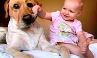 Evita que tu mascota ingrese al cuarto de la persona que sufre de alergias