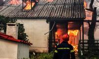 Incendio forestal ha dejado al menos 74 muertos en Gerecia