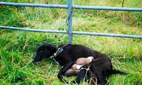 Perrita y sus cachorros ya fueron recatados del maltrato animal