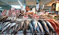 Pescados pueden ser vendidos en mal estado