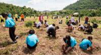 Estudiantes plantaran árboles para graduarse