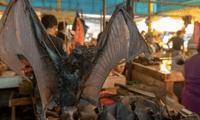 Los animales son vendidos a cuatro dólares en el mercado Tomohon Extreme Meat.
