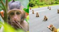 Los monos mantuvieron su distancia para recibir su comida.