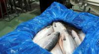 El virus de la Anemia Infecciosa del salmón no afecta al hombre.