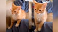 El gatito ha causado la risa de miles de personas en redes sociales.