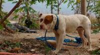 La perrita fue llevada a una veterinaria donde confirmaron el abuso.