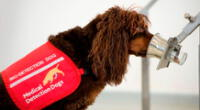El Reino Unido entrenará perros para detectar el Covid-19 en las personas.