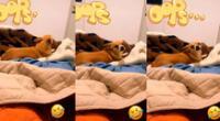 El can ha causado la risa de muchos usuarios de las redes sociales.