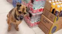 Conoce la conmovedora historia del perro de Wuhan.