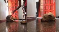 Perro es toda una sensación en TikTok por su peculiar reacción.