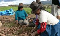 El Bono rural se otorgará a las familias más vulnerables del Perú.