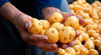 Alrededor de 15.000 agricultores de la región Apurímac enviaron al menos unas 120 toneladas de papa para ser vendido a los principales mercados de Lima.