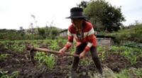 Este miércoles 24 de junio se celebra el Día del Campesino que busca reconocer el arduo trabajo de hombres y mujeres en el campo, pero sufre una crisis por la pandemia de coronavirus.