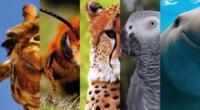 Este 4 de julio se celebra el Día Internacional de la Vida Silvestre.