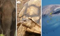 La Unión Internacional de Conservación de la Naturaleza (Uicn) menciona que alrededor de 3.000 especies de animales se encuentran en peligro de extinción.