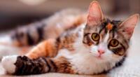 El gatito no dudó en demostrar su amor mediante unos 'masajes'.