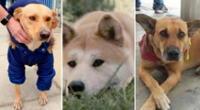 Conoce a los cachorros que esperaron más de 10 años por sus dueños