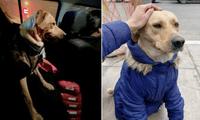 La historia real del  perro contada por la periodista de ATV  ha sorprendido a miles en las redes sociales.